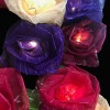 Cabbage Rose - 10 Lamps